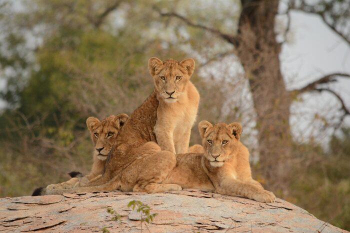 5 Day Sabi Sands and Kruger Vacation